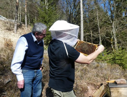 Bienenhonig von der Gänskopfhütte