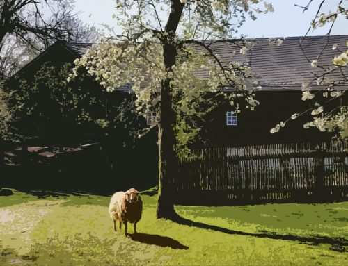 FGV Stellungnahme zu Äußerungen im Stadtrat Arzberg bezüglich des Gerätemuseums Bergnersreuth